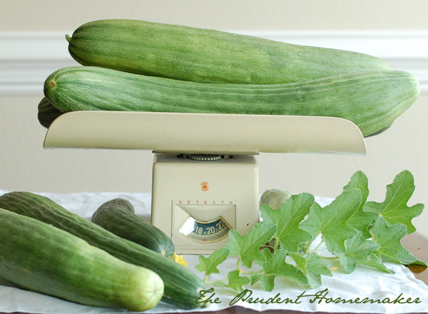 Armenian Cucumbers on Scale The Prudent Homemaker