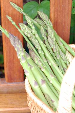 Asparagus in April