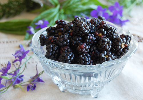 Blackberries in June