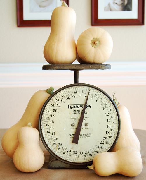 Butternut Squash on scale 500