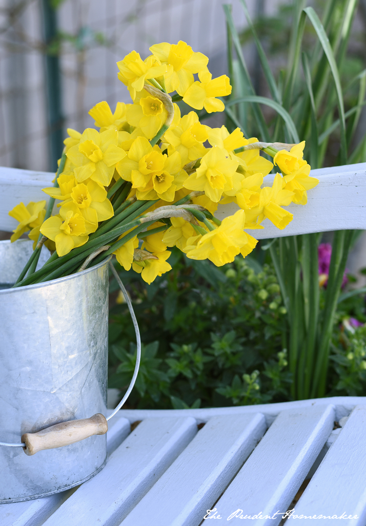 Daffodils in Pail The Prudent Homemaker