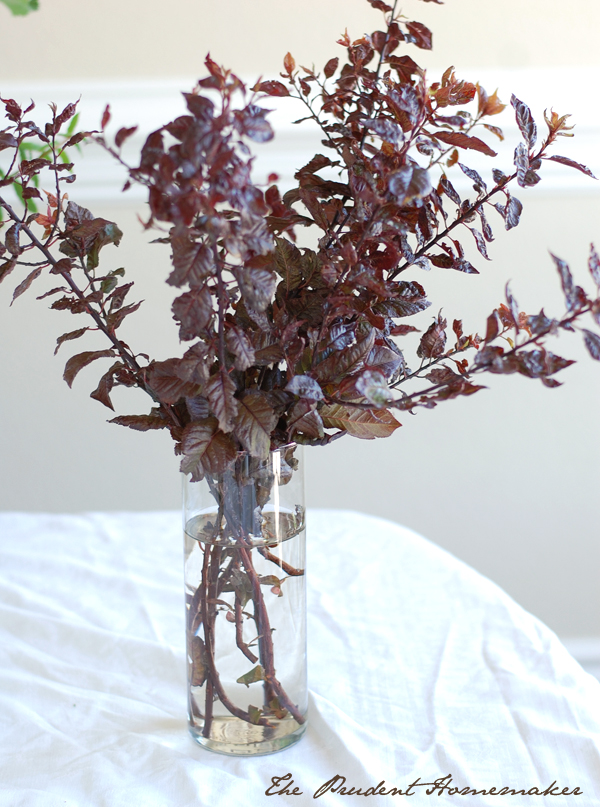 Flowering Plum Branches The Prudent Homemaker