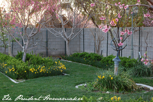 Garden in Spring The Prudent Homemaker