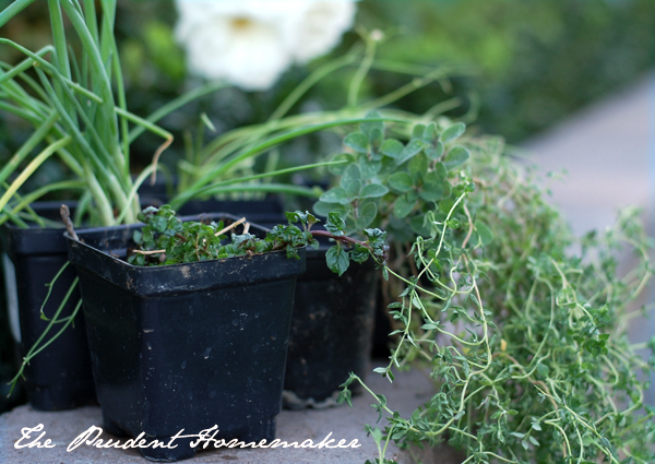 Herb Garden Gift The Prudent Homemaker