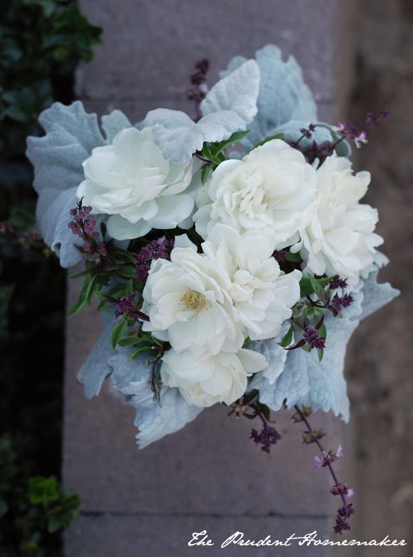 Roses Thai Basil Dusty Miller The Prudent Homemaker