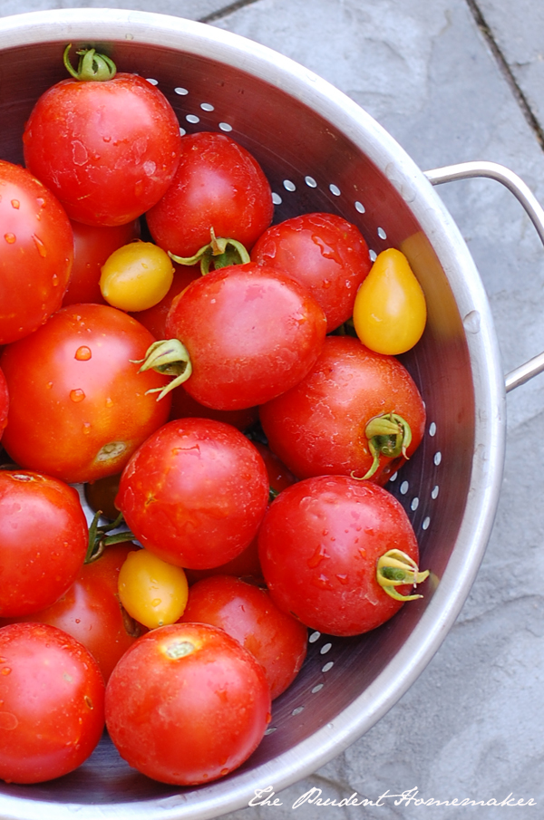 Tomatoes in Colander The Prudent Homemaker