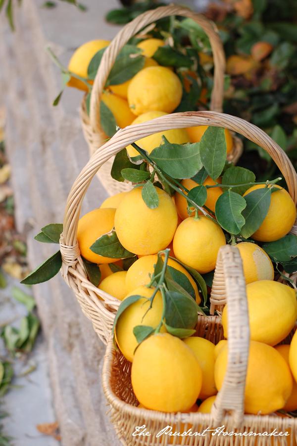 Meyer Lemons 2014