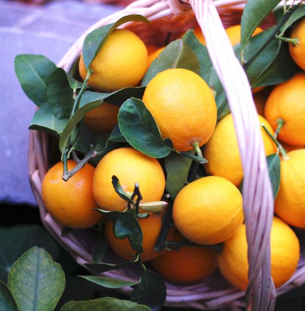 Meyer Lemons Square The Prudent Homemaker