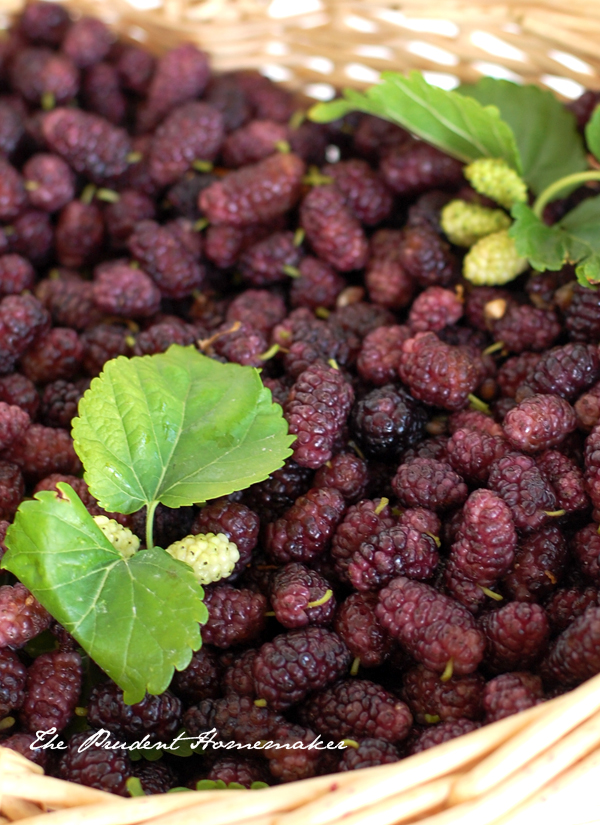 Mulberries The Prudent Homemaker