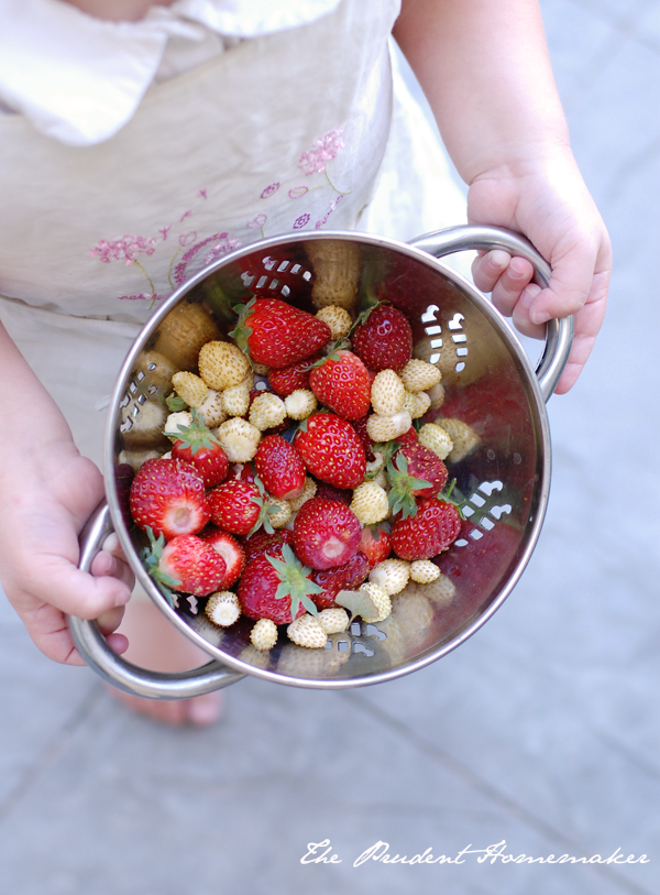 Red and White Strawberries The Prudent Homemaker