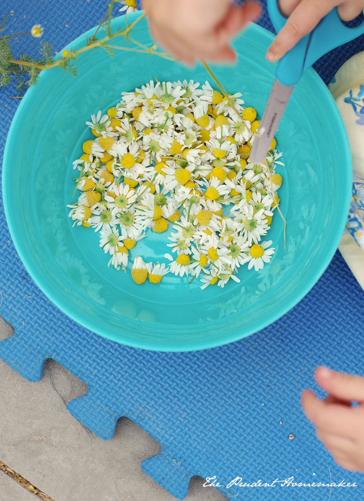 Chamomile in bowl The Prudent Homemaker