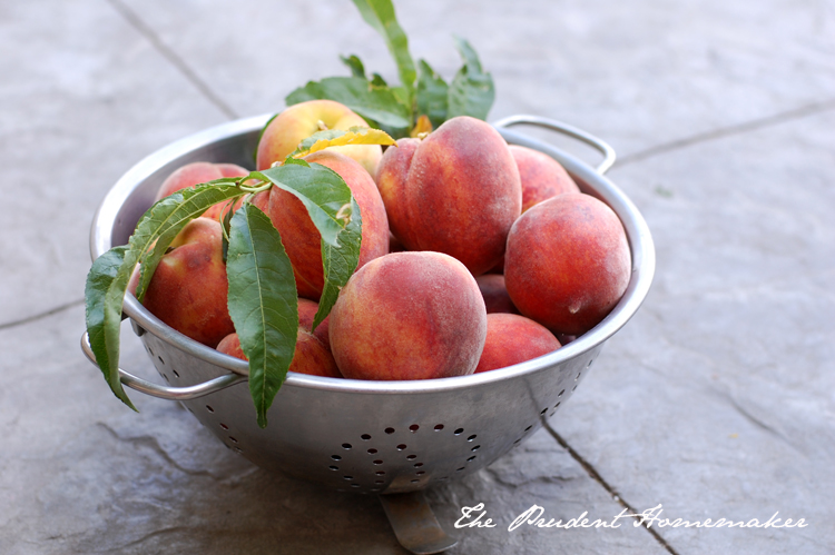 Desert Gold Peaches The Prudent Homemaker