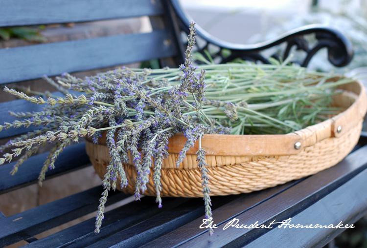 Lavender The Prudent Homemaker