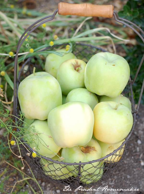 Apples in wire basket The Prudent Homemaker