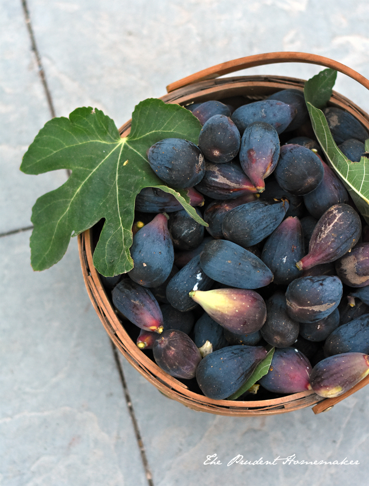 Mission Figs 2 The Prudent Homemaker