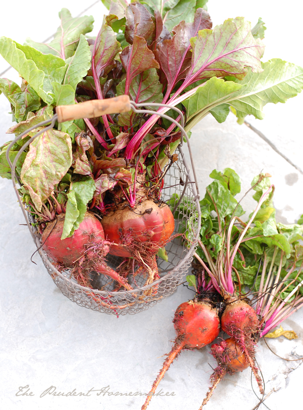 Beets in Basket The Prudent Homemaker