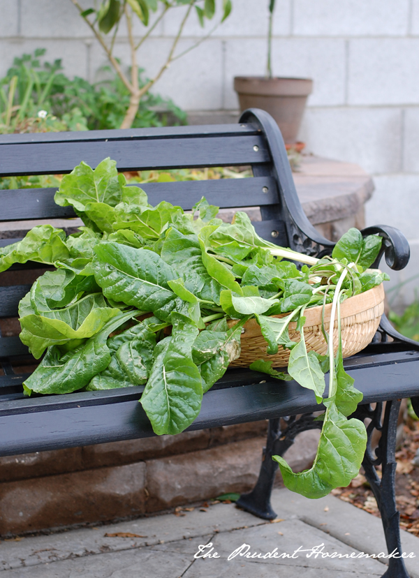 Swiss chard on bench The Prudent Homemaker
