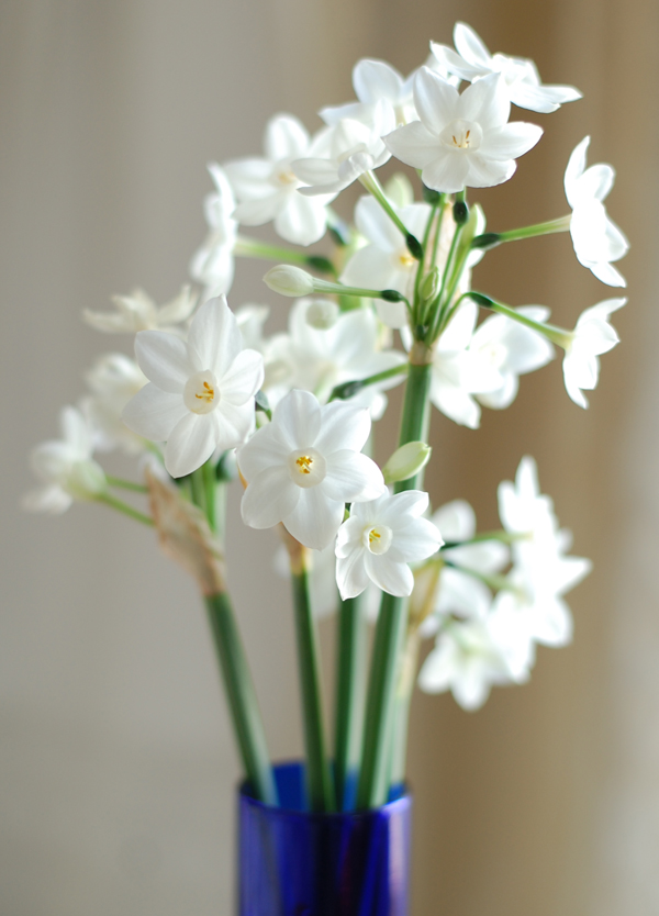 Narcissus 2 The Prudent Homemaker