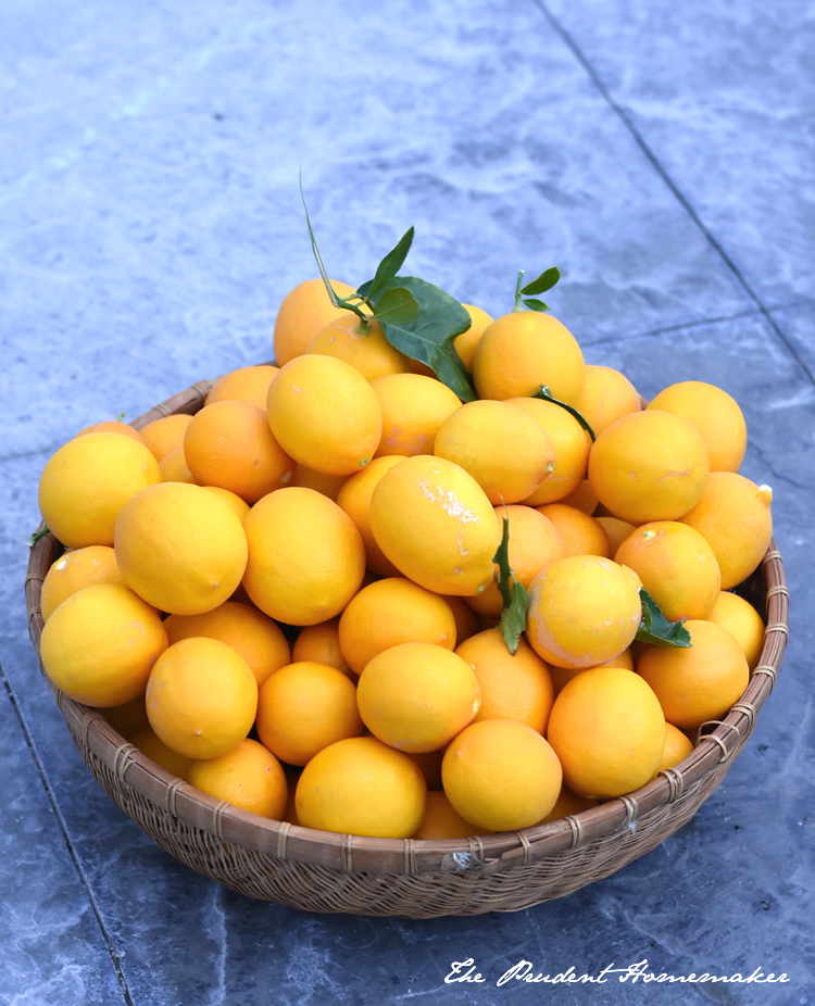 Meyer Lemons in Basket The Prudent Homemaker