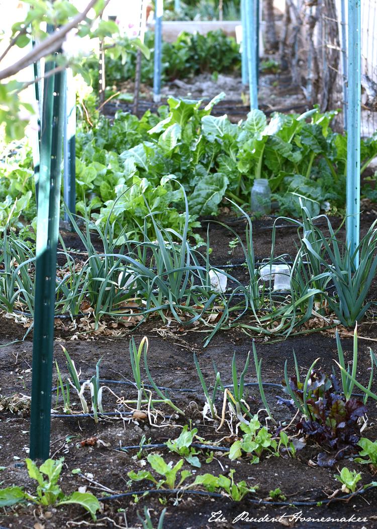 Garden Vegetables The Prudent Homemaker