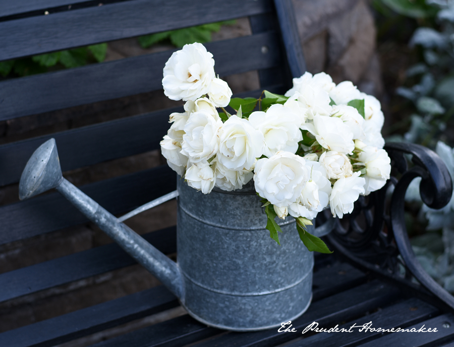 Iceberg Roses in Watering Can The Prudent Homemaker