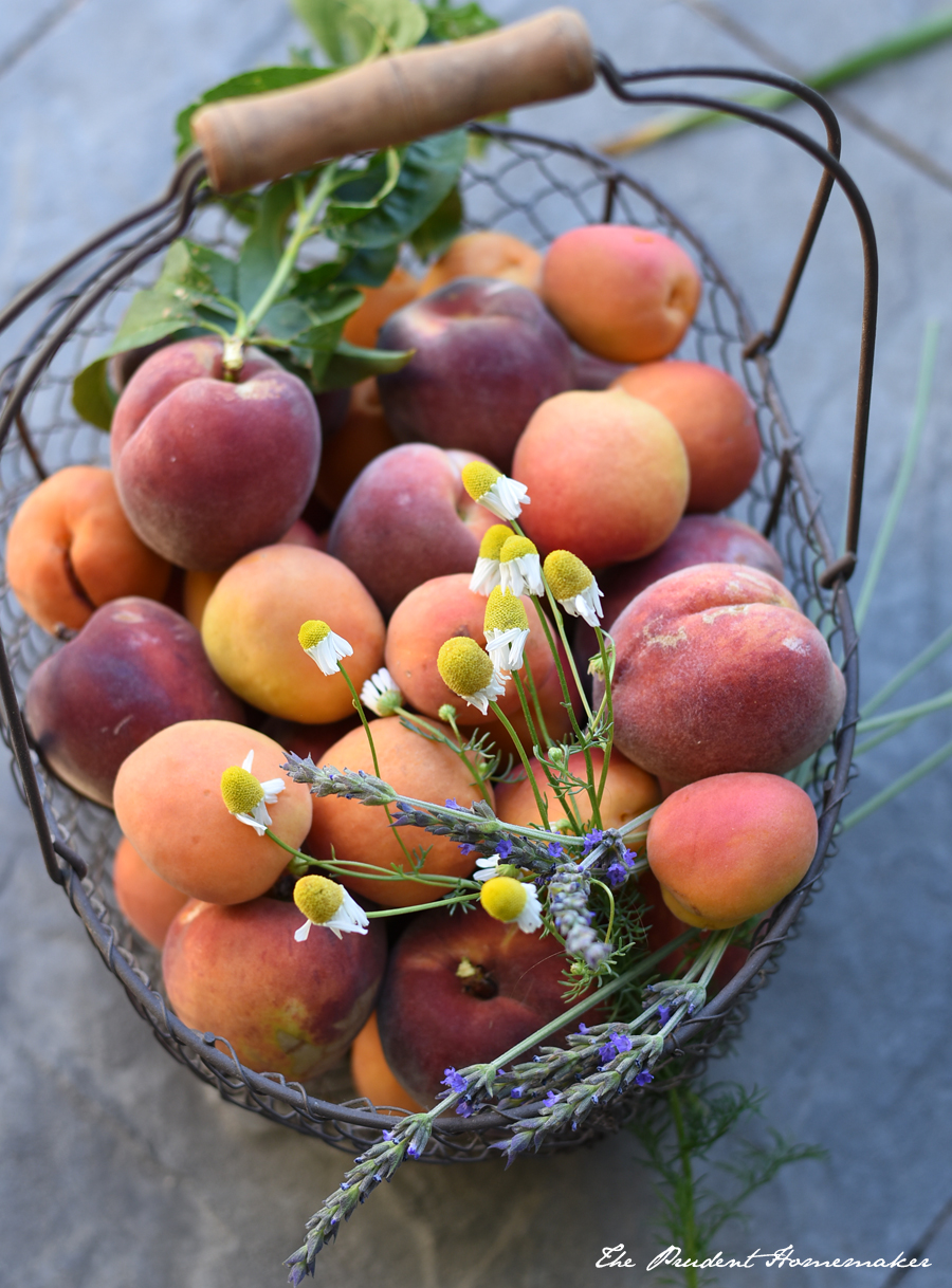 Apricots peaches and herbs The Prudent Homemaker