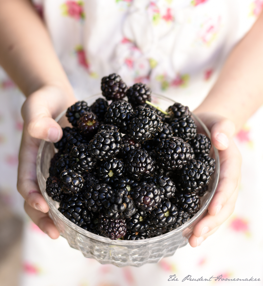 Blackberries The Prudent Homemaker
