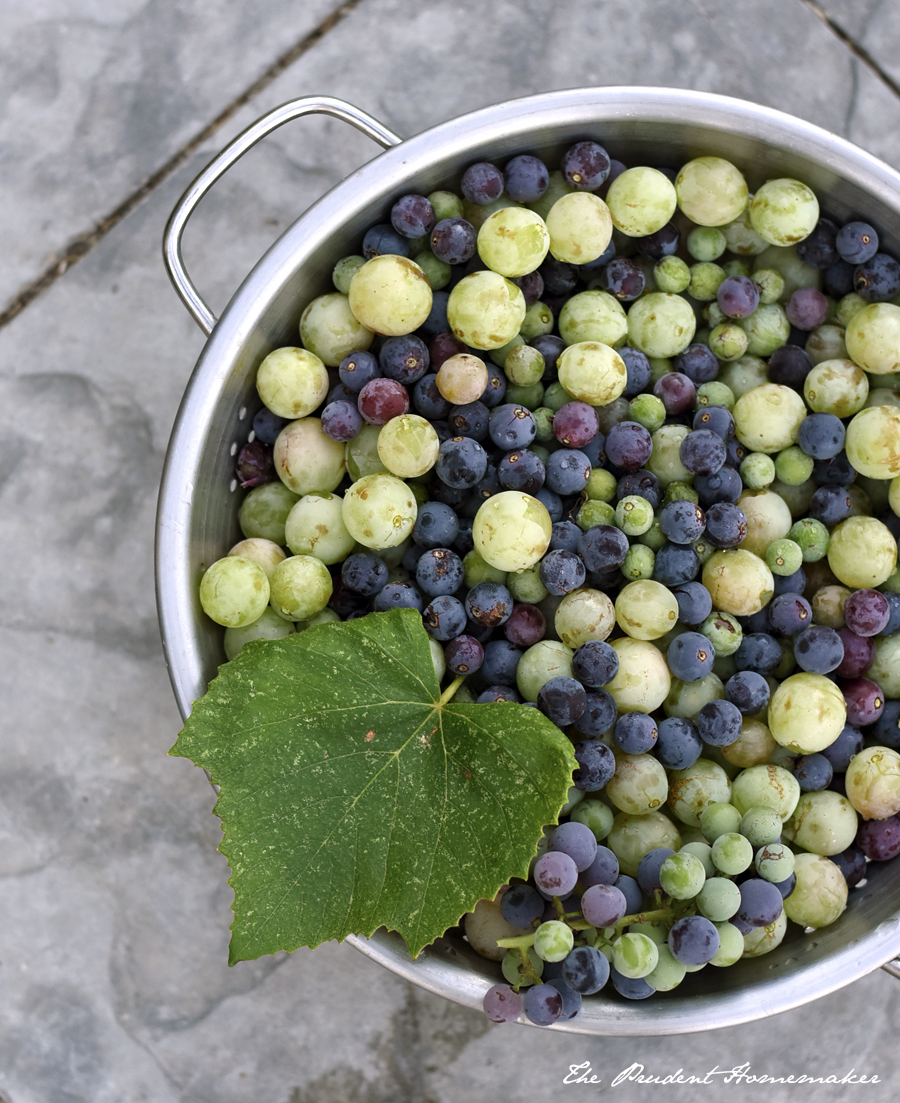 Concord and Table Grapes The Prudent Homemaker