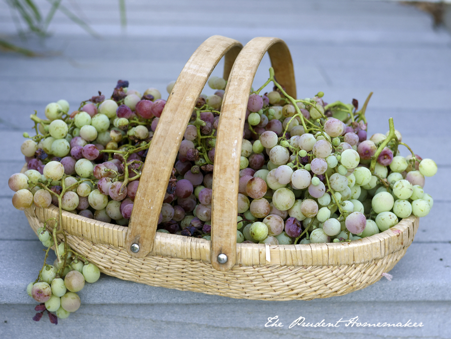 Table Grapes The Prudent Homemaker