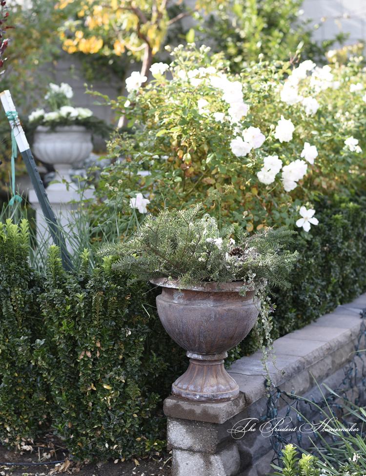 Winter Garden Urns The Prudent Homemaker