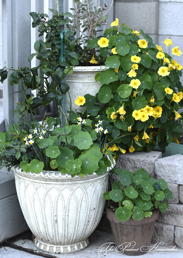March Pots The Prudent Homemaker
