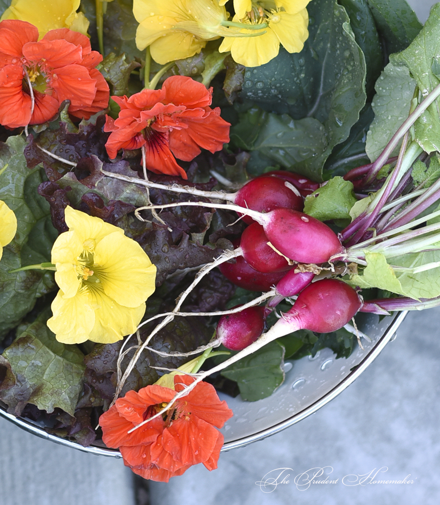 Salad Produce The Prudent Homemaker