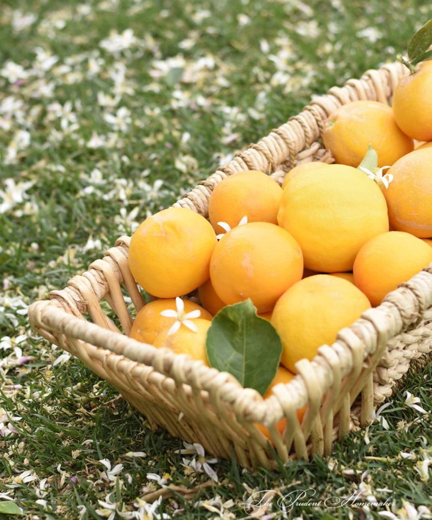 Meyer Lemons and Blossoms The Prudent Homemaker