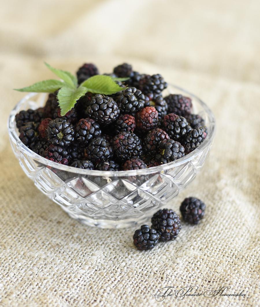 Blackberries in bowl The Prudent Homemaker