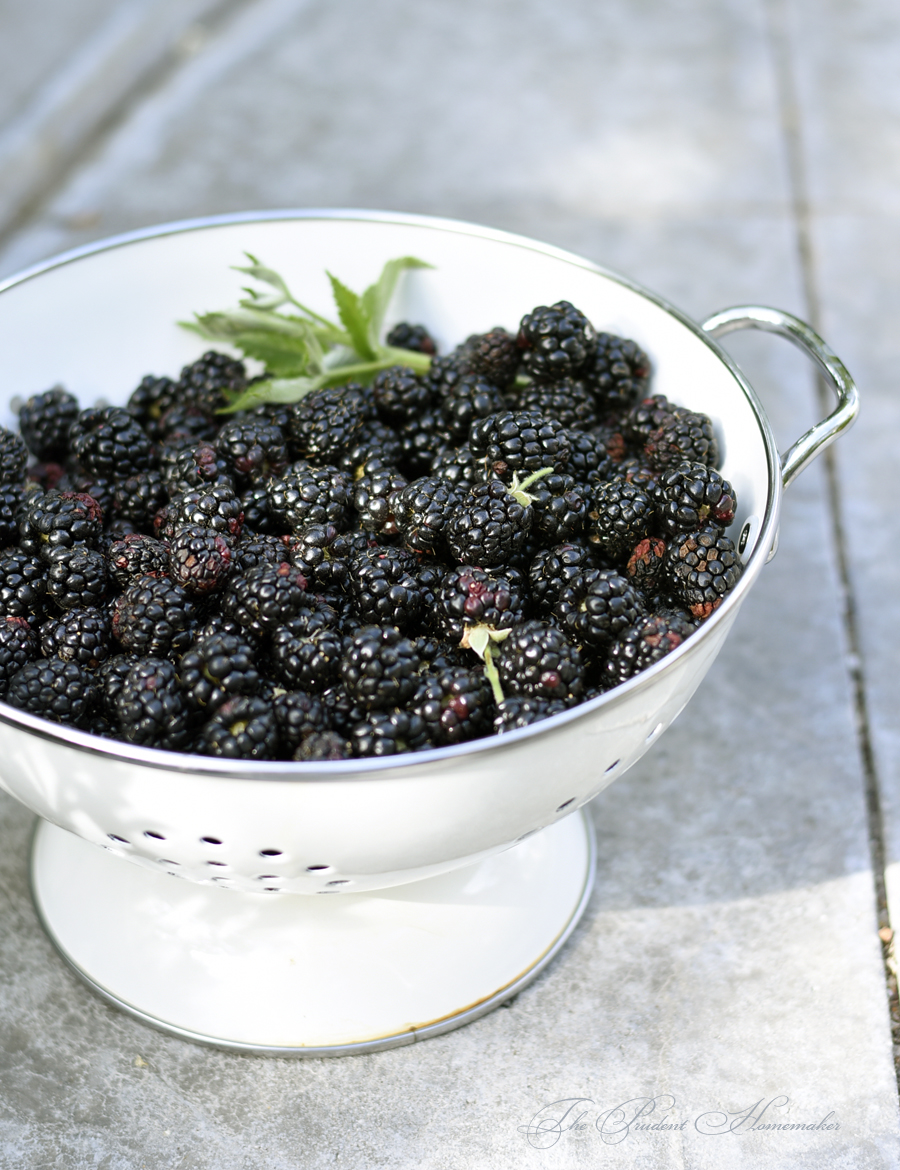 Blackberries 2 The Prudent Homemaker