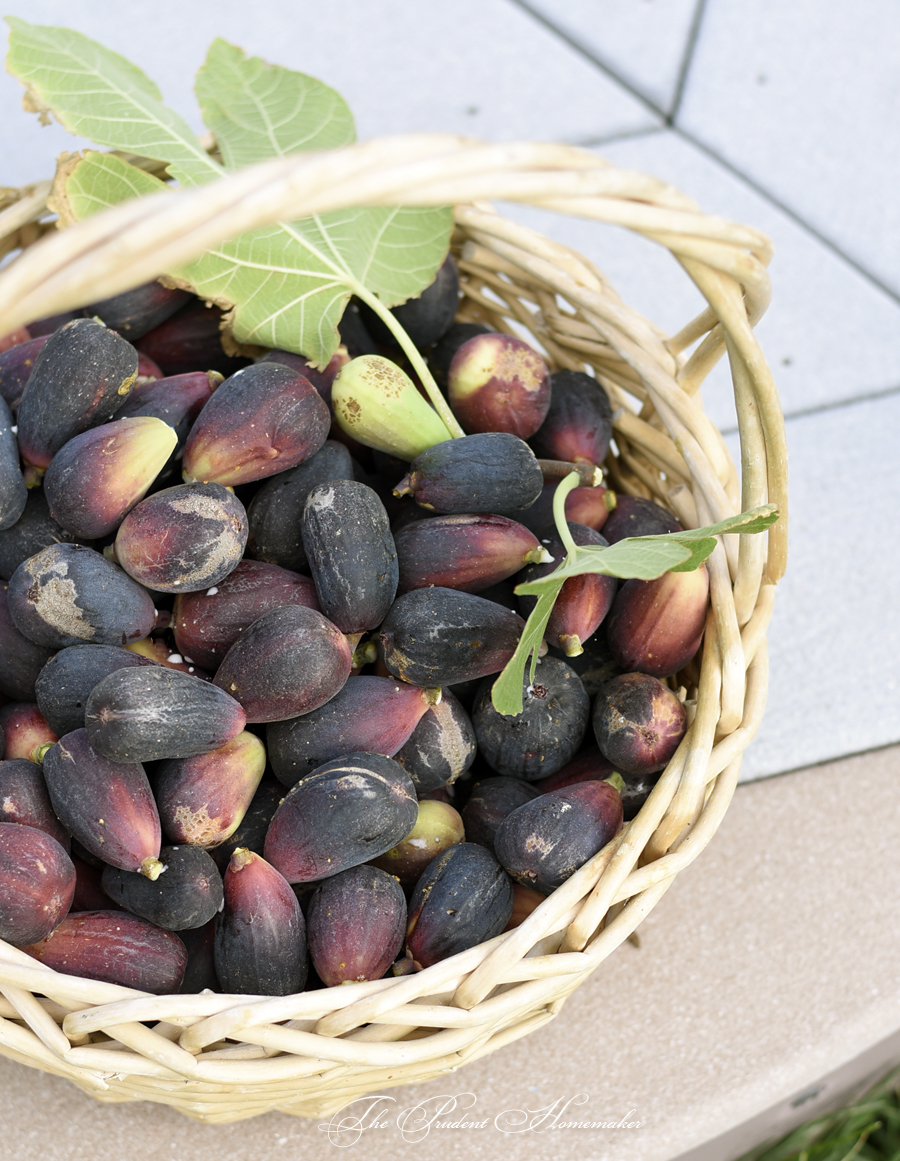 Mission Figs in Basket The Prudent Homemaker