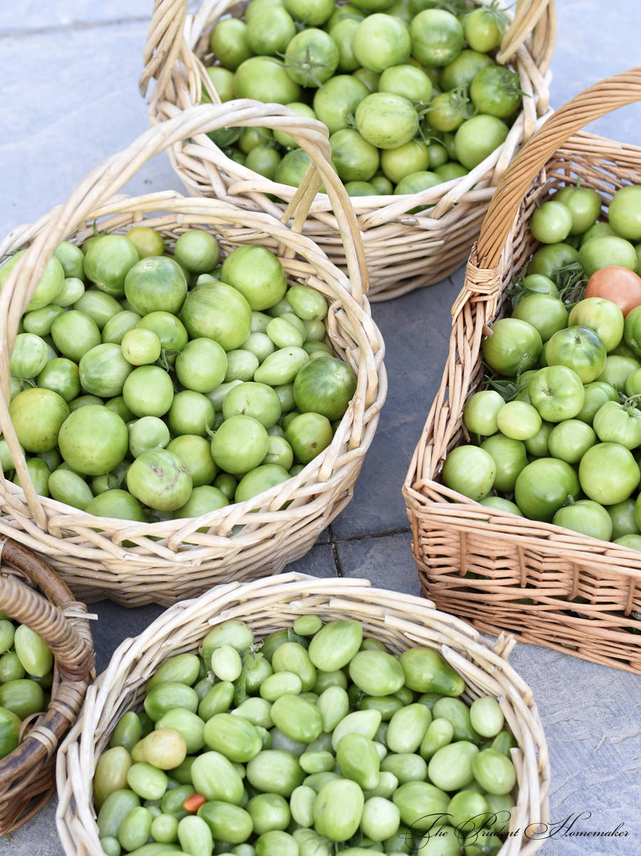 Green Tomatoes in December The Prudent Homemaker