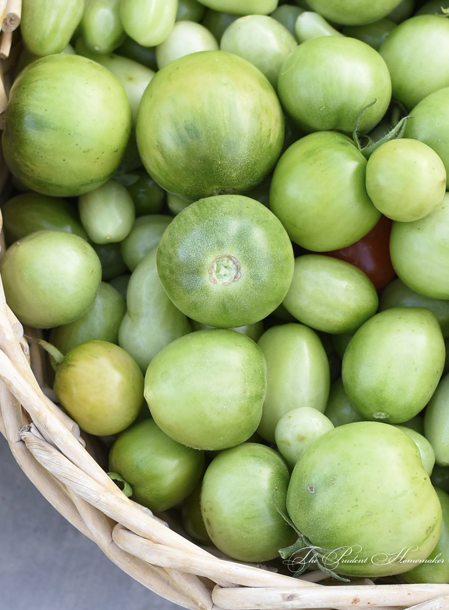Green tomatoes detail The Prudent Homemaker
