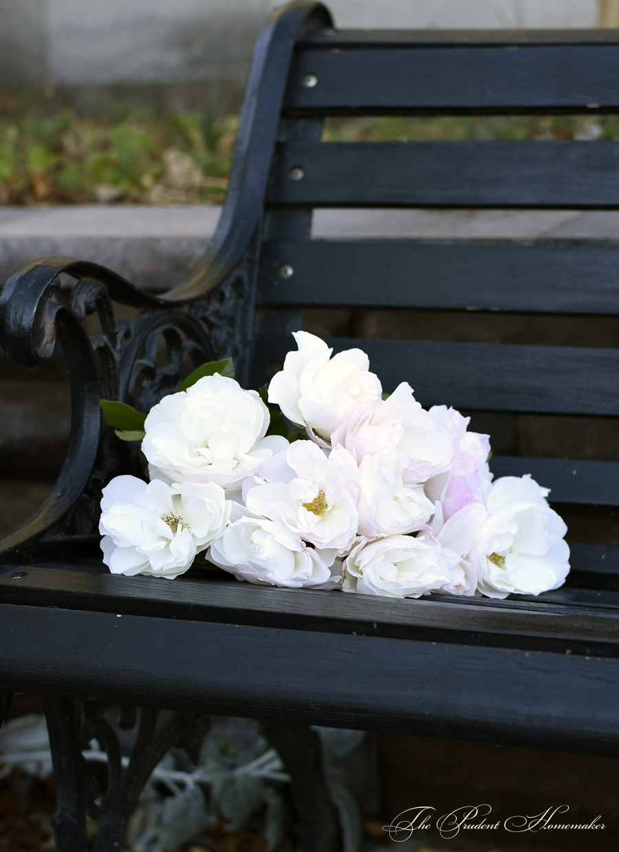 Roses on Black Bench The Prudent Homemaker