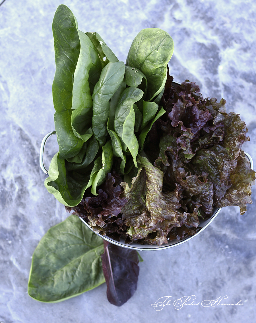 Lettuce and Spinach The Prudent Homemaker