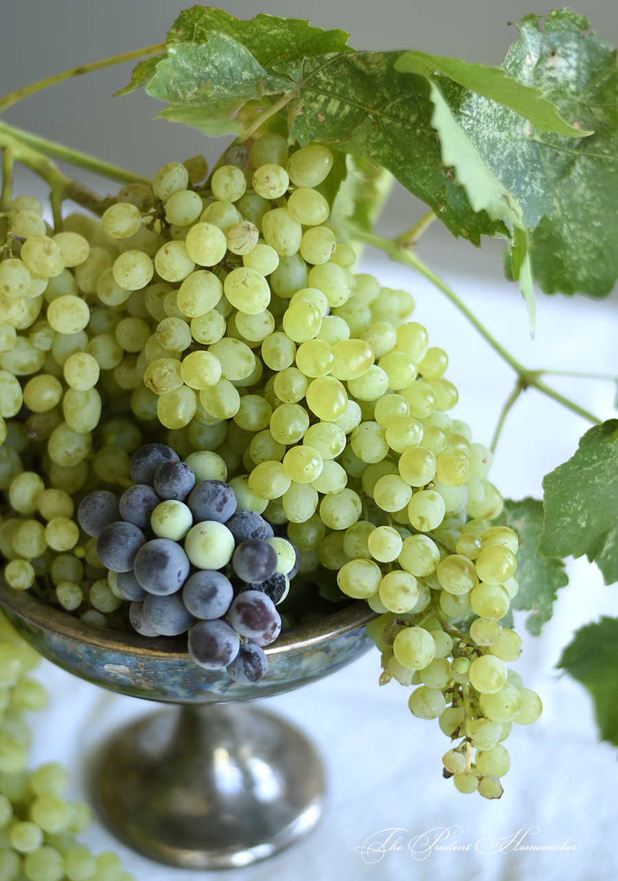 Grapes in urn The Prudent Homemaker